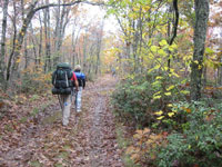 mt mitchell hiking nc